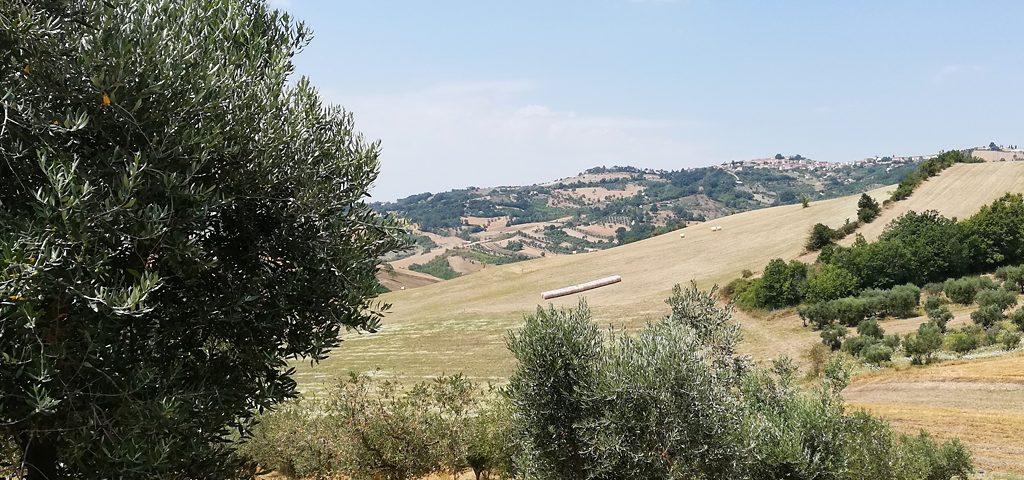 oliveti_12
